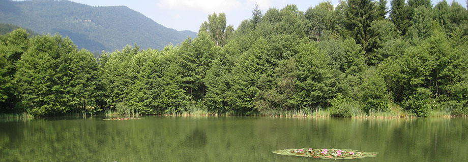 der Teich Glinokop