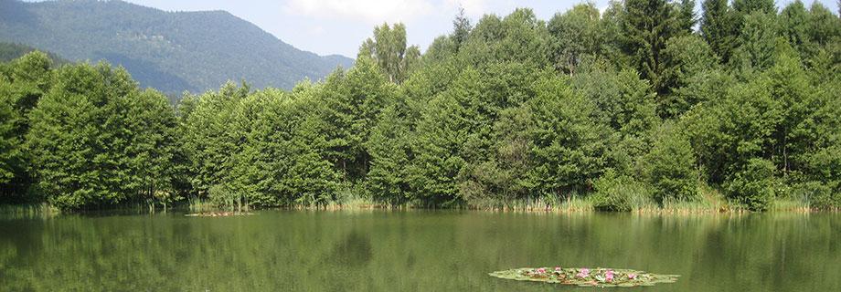 The pond Glinokop