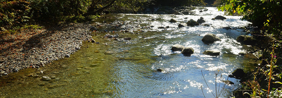 Potok Jesenice (13)