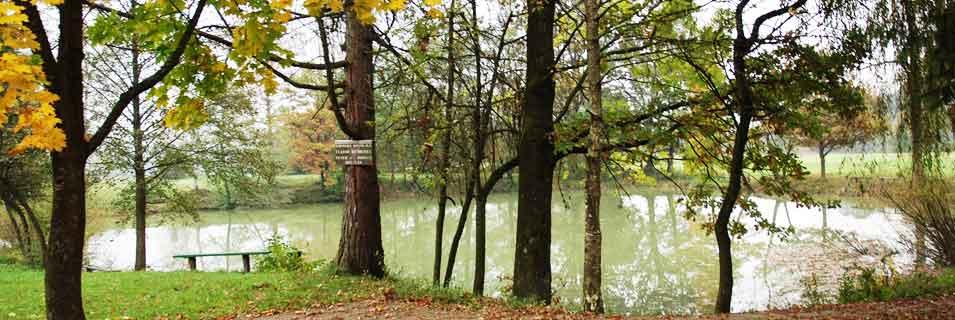 Ribniki pri Ribiškem domu v Sinji Gorici